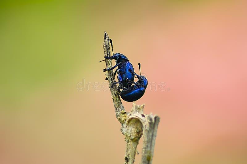 Το έντομο στοκ φωτογραφίες με δικαίωμα ελεύθερης χρήσης