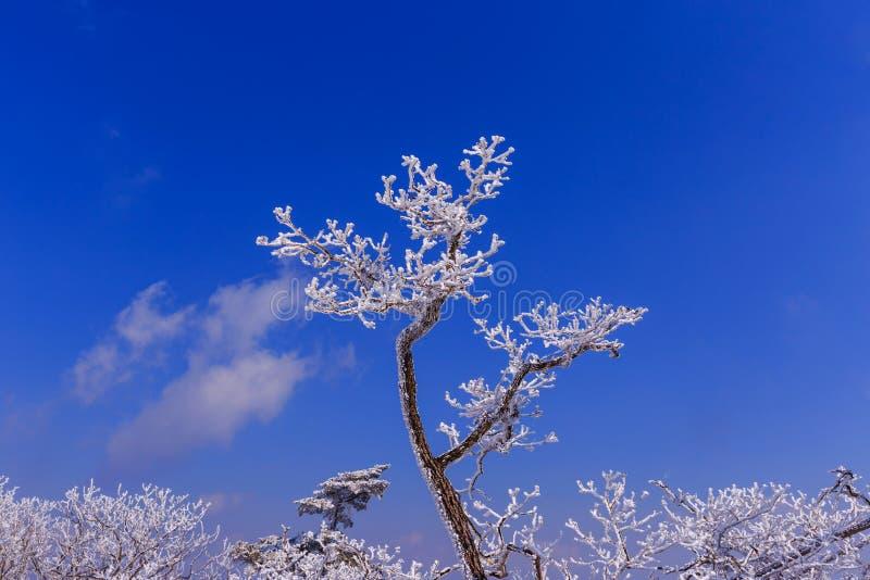 Το δέντρο είναι κάλυψη από το χιόνι στοκ εικόνες