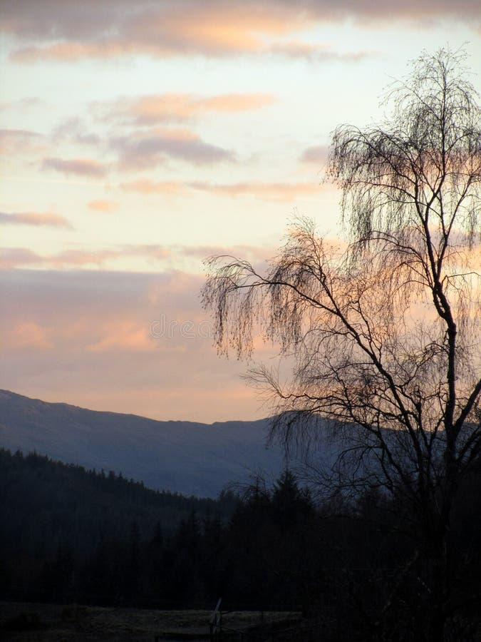 το δέντρο ιτιών στο σούρουπο στοκ φωτογραφία