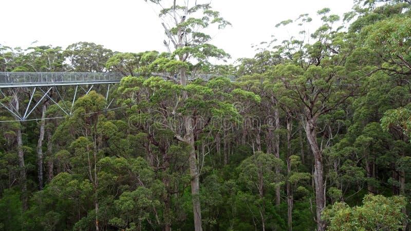 Το δέντρο ολοκληρώνει τη διάβαση πεζών στη δυτική Αυστραλία Walpole το φθινόπωρο στοκ φωτογραφία
