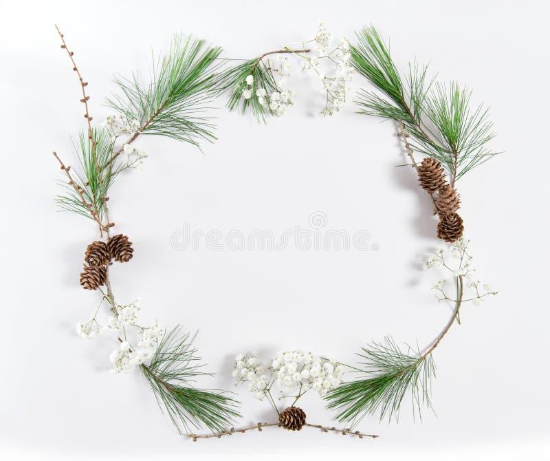 Το δέντρο πεύκων πλαισίων διακλαδίζεται επίπεδο διακοπών Χριστουγέννων κώνων βρέθηκε στοκ εικόνα με δικαίωμα ελεύθερης χρήσης