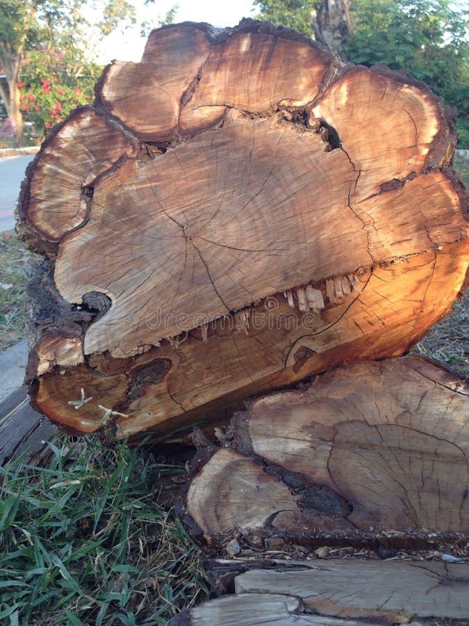 Το δέντρο που περιορίζει στοκ εικόνα με δικαίωμα ελεύθερης χρήσης