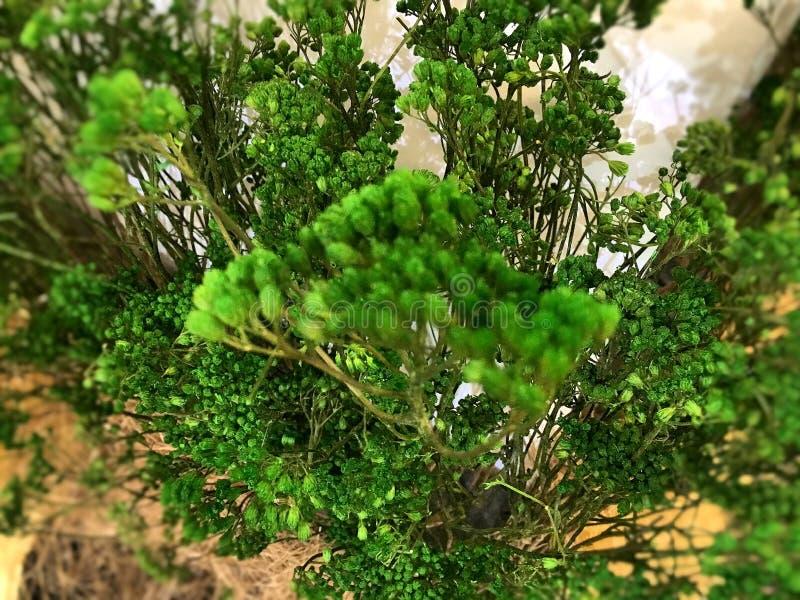 Το δέντρο στη λεωφόρο στοκ φωτογραφίες με δικαίωμα ελεύθερης χρήσης