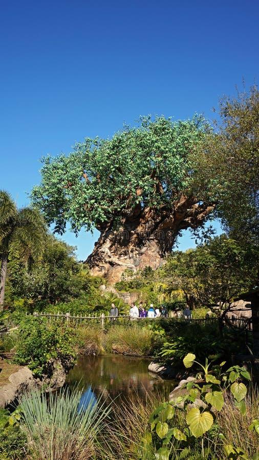 Το δέντρο της ζωής στο ζωικό βασίλειο στοκ φωτογραφία