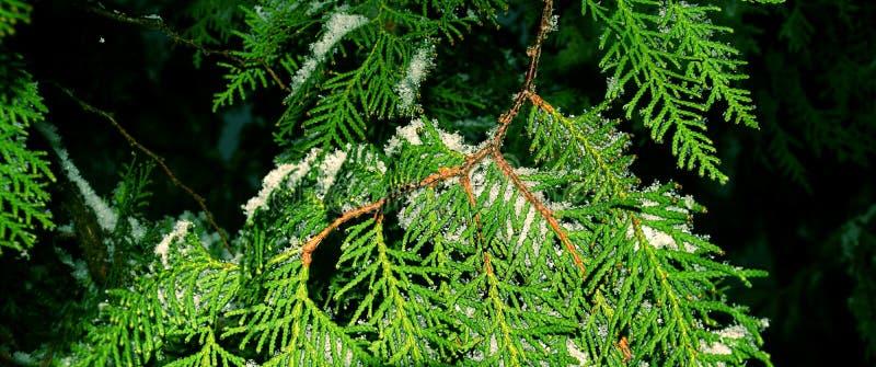 Το δέντρο της ζωής στοκ εικόνες με δικαίωμα ελεύθερης χρήσης