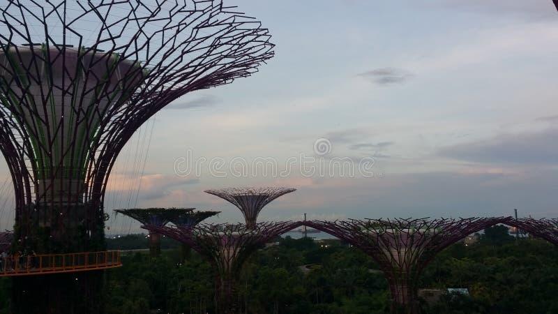 Το έξοχο δέντρο αλσών στοκ φωτογραφίες