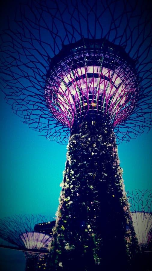 Το έξοχο δέντρο αλσών στοκ φωτογραφία με δικαίωμα ελεύθερης χρήσης