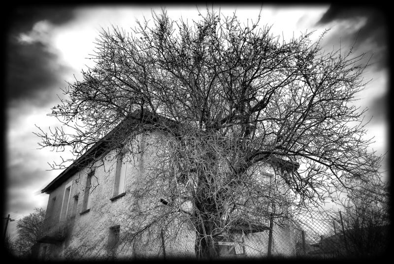 Το αγροτικό σπίτι μοιάζει με την κατανάλωση ενός δέντρου στοκ εικόνα