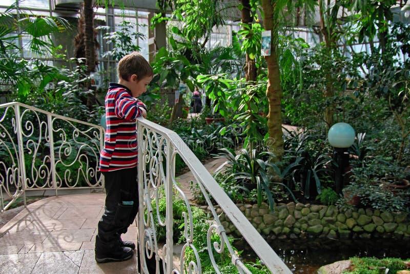 Το αγόρι 6-8 έτη στέκεται στη γέφυρα πέρα από τη λίμνη στον τροπικό βοτανικό κήπο θερμοκηπίων στοκ φωτογραφία με δικαίωμα ελεύθερης χρήσης
