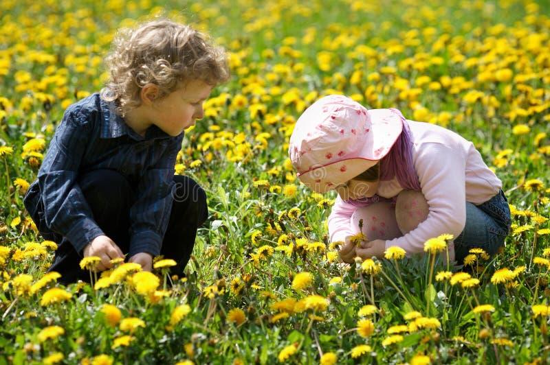 Το αγόρι και το κορίτσι το καλοκαίρι ανθίζουν το πεδίο στοκ εικόνα με δικαίωμα ελεύθερης χρήσης