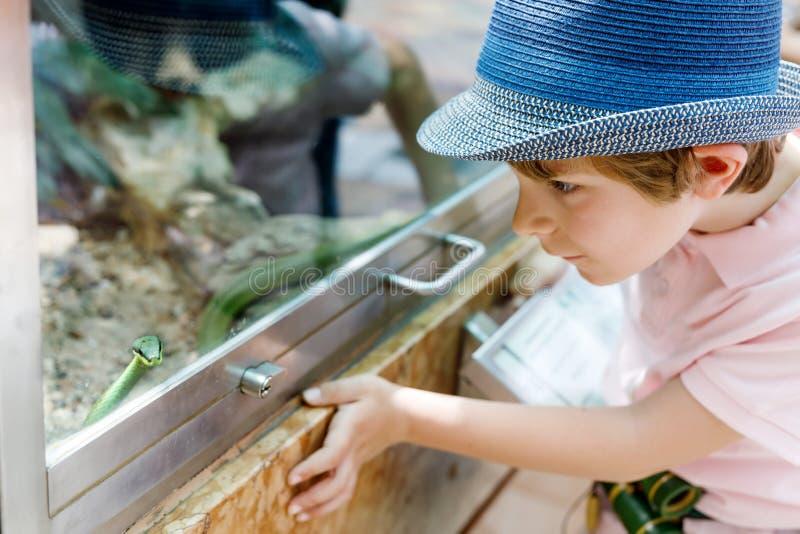 Το αγόρι παιδάκι θαυμάζει το δηλητηριώδες πράσινο φίδι στο terrarium στοκ φωτογραφία με δικαίωμα ελεύθερης χρήσης