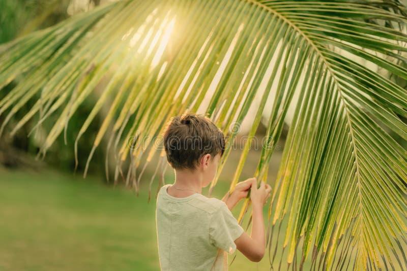 Το αγόρι στην πράσινη χλόη που κρατά έναν κλάδο φοινικών στοκ φωτογραφία με δικαίωμα ελεύθερης χρήσης