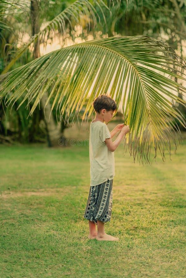 Το αγόρι στην πράσινη χλόη που κρατά έναν κλάδο φοινικών στοκ εικόνα