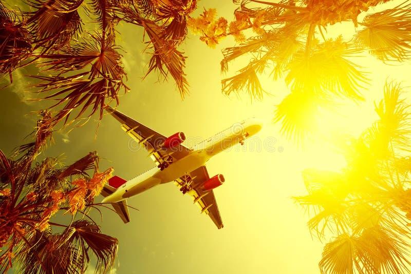 Το αεροπλάνο που πετούν πέρα από έναν ήρεμο ωκεανό με μια θαυμάσια σκηνή ηλιοβασιλέματος με το φοίνικα και τα φύλλα φοινικών ένα  στοκ φωτογραφία