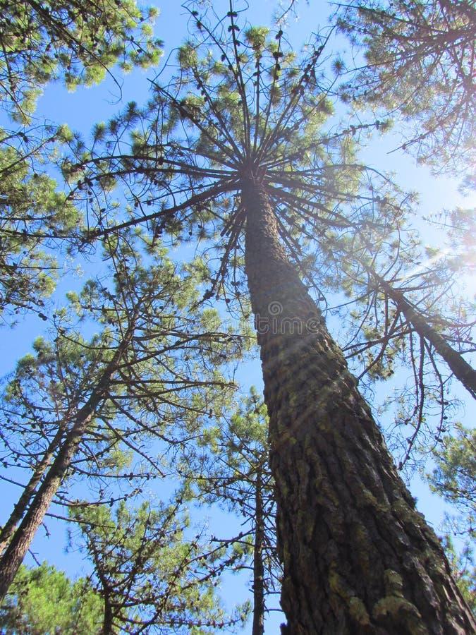 Το αναμμένο επάνω δέντρο στο δάσος στοκ φωτογραφία