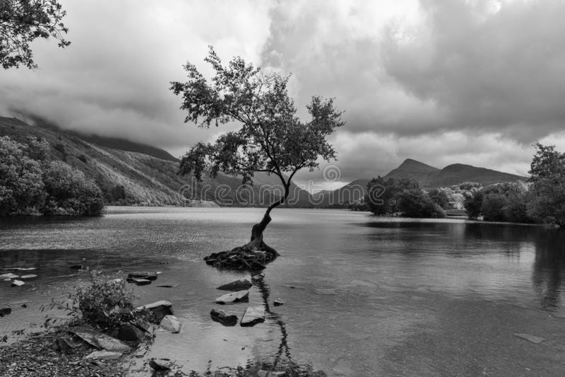 Το απομονωμένο δέντρο - βόρεια Ουαλία UK Llanberis στοκ εικόνα με δικαίωμα ελεύθερης χρήσης