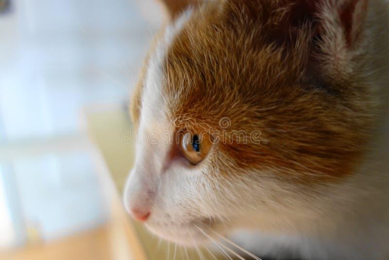 Το απόγευμα αντιμετωπίζει με μια παράξενη γάτα στοκ φωτογραφίες με δικαίωμα ελεύθερης χρήσης