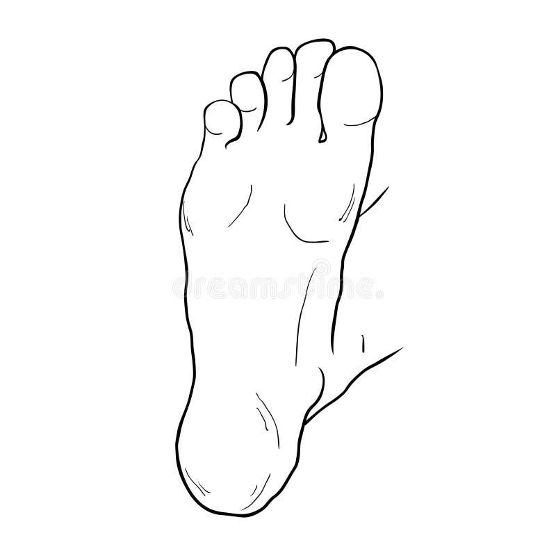 Το αρσενικό επάνω πέλμα ποδιών επίσης corel σύρετε το διάνυσμα απεικόνισης διανυσματική απεικόνιση