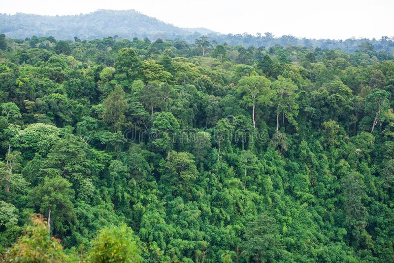 Το αρχαίο τροπικό δάσος το φυσικό σημείο τροπικών δασών είναι μέρος ενός μεγάλου εθνικού πάρκου όπου τα άγρια ζώα ζουν Οροπέδιο B στοκ εικόνες με δικαίωμα ελεύθερης χρήσης