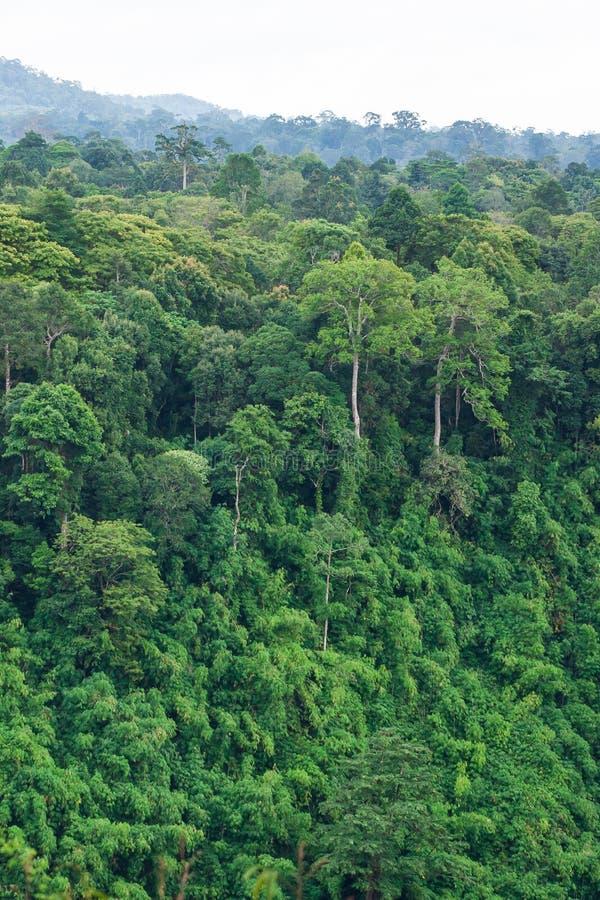 Το αρχαίο τροπικό δάσος το φυσικό σημείο τροπικών δασών είναι μέρος ενός μεγάλου εθνικού πάρκου όπου τα άγρια ζώα ζουν Οροπέδιο B στοκ εικόνες