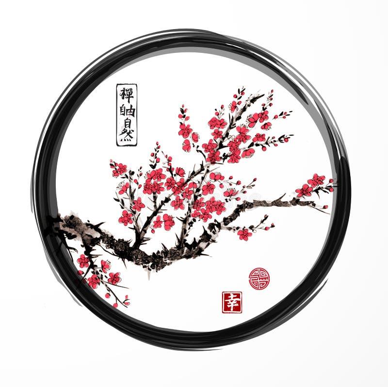 Το ασιατικό δέντρο κερασιών sakura που ανθίζει στο μαύρο enso zen περιβάλλει στο άσπρο υπόβαθρο Περιέχει hieroglyphs - zen, ελευθ ελεύθερη απεικόνιση δικαιώματος