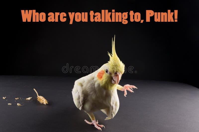 Το αστείο πουλί memes, cWho αποσπάσματος είναι εσείς που μιλάτε, πανκ Χαριτωμένο Lutino κίτρινο Cockatiel στοκ εικόνα με δικαίωμα ελεύθερης χρήσης