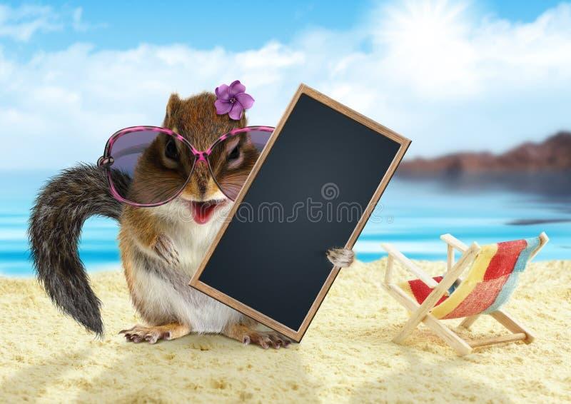 Το αστείο chipmunk στις διακοπές θερινών διακοπών κρατά το κενό κενό έμβλημα, καθμένος στην παραλία στοκ φωτογραφία με δικαίωμα ελεύθερης χρήσης