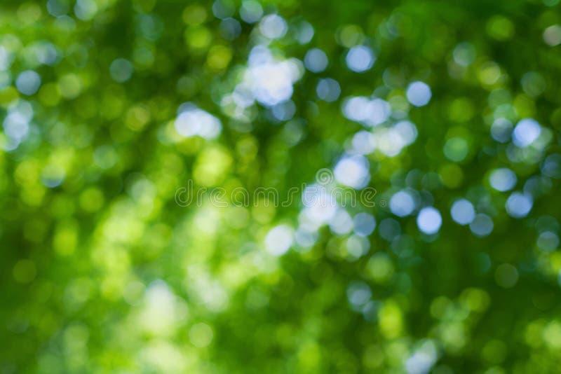 Το αφηρημένο φυσικό υπόβαθρο θαμπάδων, τα φύλλα, πράσινο bokeh στοκ φωτογραφίες με δικαίωμα ελεύθερης χρήσης