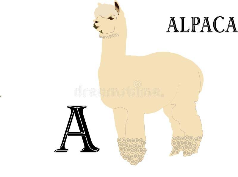 Το Α είναι για τη προβατοκάμηλο διανυσματική απεικόνιση