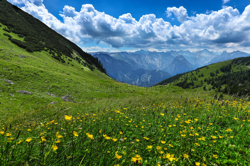 Το αλπικό λιβάδι ανθίζει το τοπίο θερινών βουνών Αυστρία, Tirol, περιοχή Achensee στοκ εικόνα