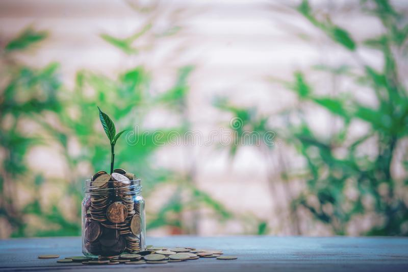 Το βάζο γυαλιού με τα σπορόφυτα εγκαταστάσεων νομισμάτων αυξάνεται στα μπουκάλια - ιδέες επένδυσης στοκ φωτογραφία με δικαίωμα ελεύθερης χρήσης