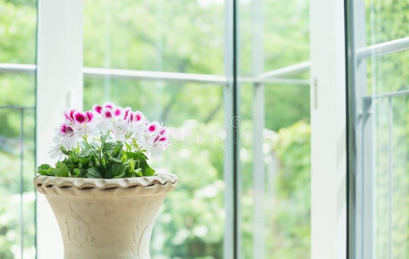 Το βάζο τερακότας ή το δοχείο λουλουδιών με το γεράνι ανθίζει πέρα από το παράθυρο στο υπόβαθρο κήπων, εγχώρια διακόσμηση στοκ εικόνα