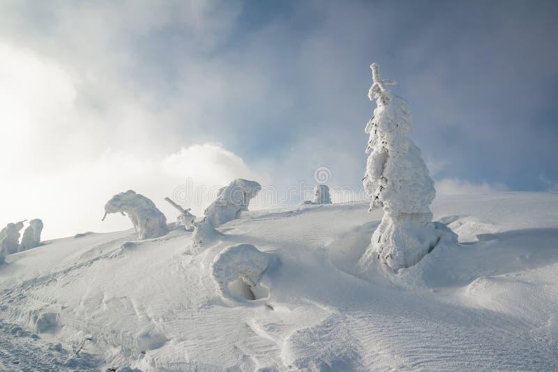 Το βαρύ χιόνι στρώματος καλύπτει τα κωνοφόρα δέντρα και το κυματιστό τοπίο στοκ φωτογραφία με δικαίωμα ελεύθερης χρήσης