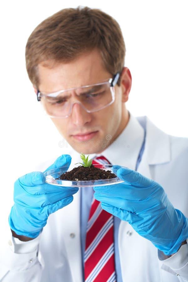 το βοηθητικό πιάτο κρατά τις μικρές νεολαίες φυτών εργαστηρίων στοκ φωτογραφία με δικαίωμα ελεύθερης χρήσης