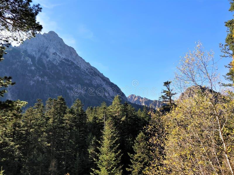 Το βουνό διακρίνει το δάσος στοκ φωτογραφία