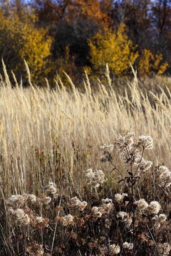 Download το βουνό οι άγρια περιοχέ&si Στοκ Εικόνα - εικόνα από λιβάδι, φυτό: 1546381
