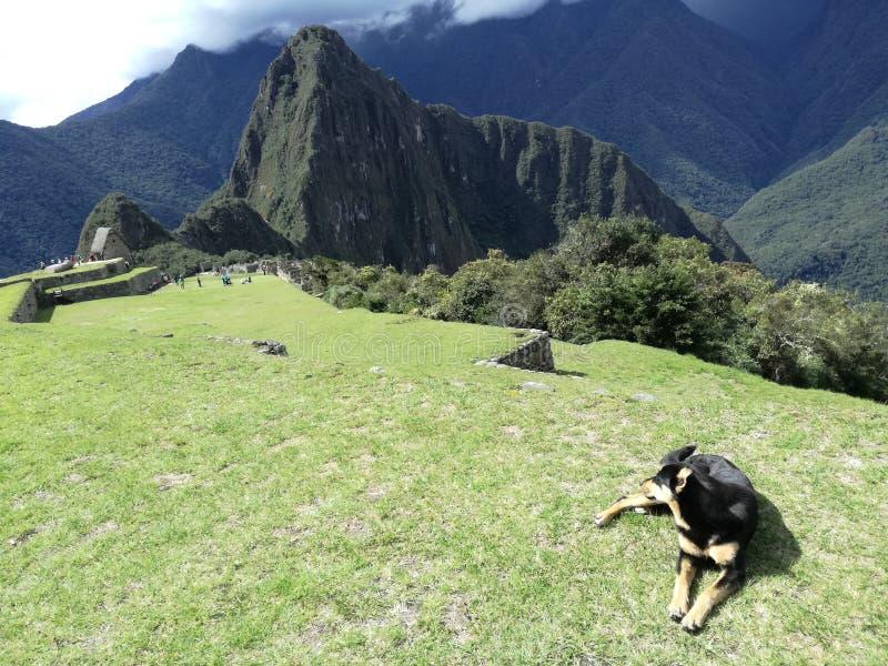 Το βουνό picchu Machu αναρριχείται με ένα σκυλί στοκ εικόνες