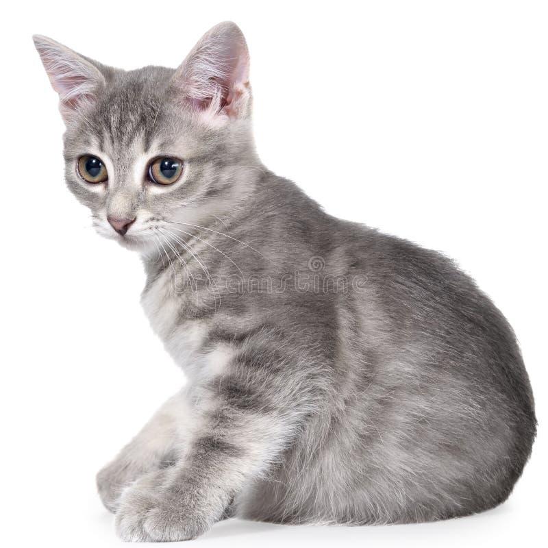 Το βρετανικό τιγρέ γατάκι shorthair βάζει απομονωμένος στοκ φωτογραφία με δικαίωμα ελεύθερης χρήσης