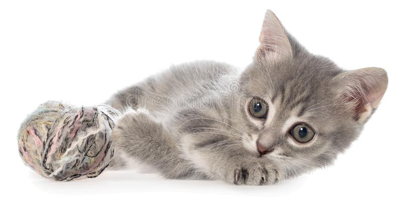 Το βρετανικό τιγρέ γατάκι shorthair βάζει και παιχνίδια με τη σφαίρα του νήματος στοκ φωτογραφία