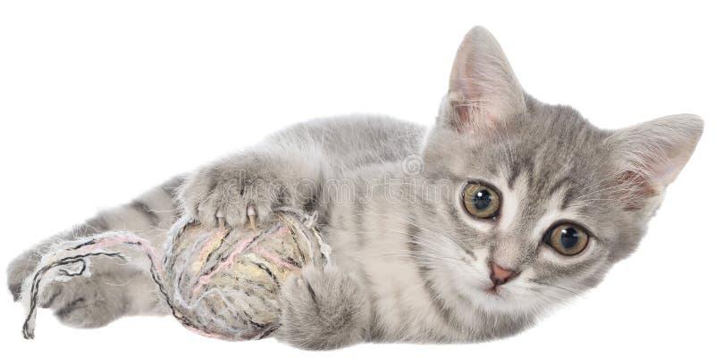 Το βρετανικό τιγρέ γατάκι shorthair βάζει και παιχνίδια με τη σφαίρα του νήματος στοκ φωτογραφίες