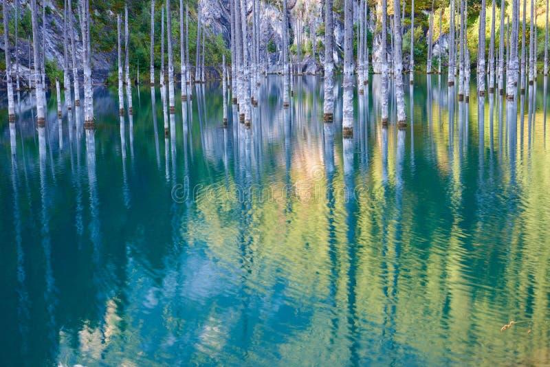 Το βυθισμένο δάσος της λίμνης Kaindy στοκ εικόνες