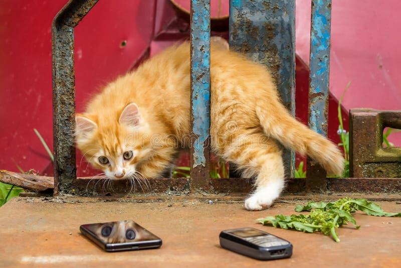 Το γατάκι έκπληκτο βλέπει την αντανάκλασή του στο τηλέφωνο κυττάρων στοκ εικόνα