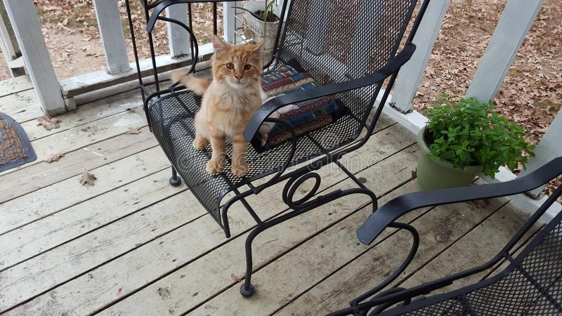 Το γατάκι έτοιμο να πάρει τη νέα ημέρα στοκ φωτογραφίες με δικαίωμα ελεύθερης χρήσης