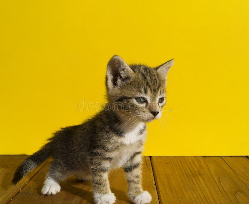 Το γατάκι κάθεται σε ένα καλάθι με τις σφαίρες του μαλλιού Η αγαπημένη ραπτική είναι ένα χόμπι στοκ φωτογραφίες
