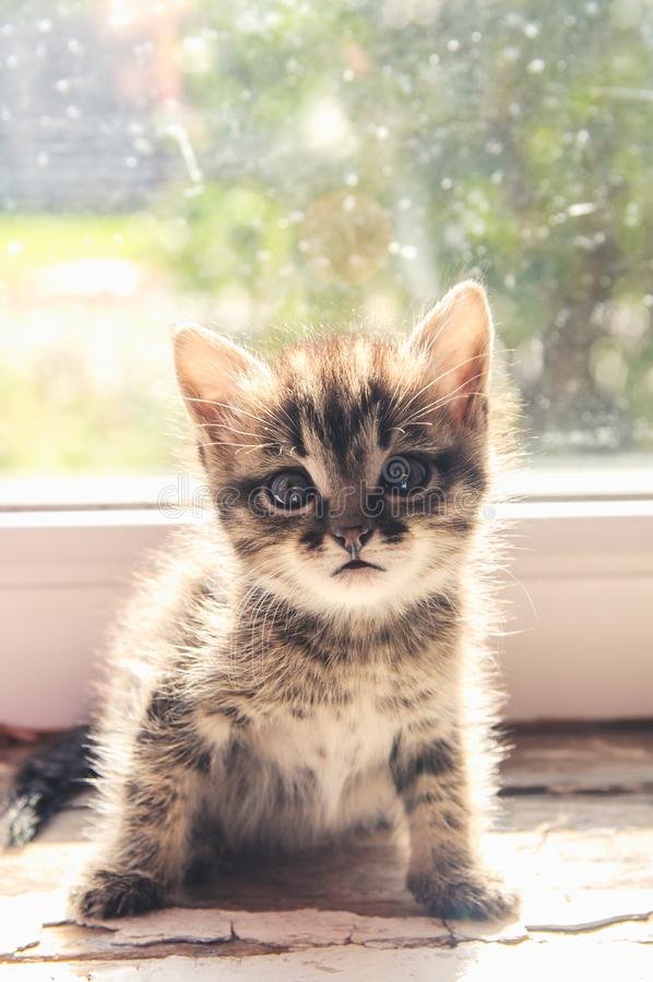 Το γατάκι κάθεται σε ένα παράθυρο στοκ φωτογραφία