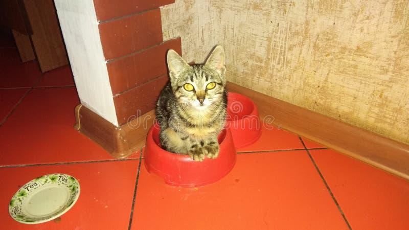 Το γατάκι κάθεται στο πιάτο στοκ φωτογραφία με δικαίωμα ελεύθερης χρήσης