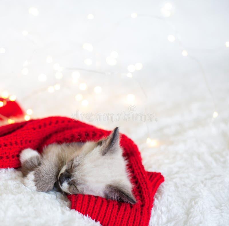 Το γατάκι κοιμάται με κόκκινες κάλτσες στοκ φωτογραφία