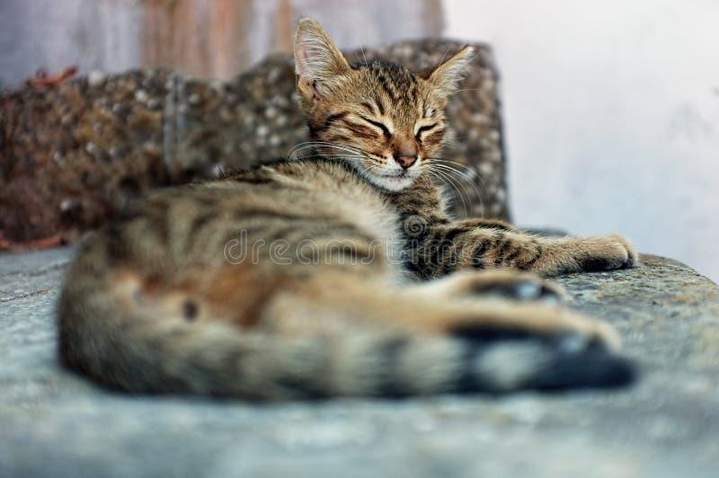 Το γατάκι κοιμάται στο πάτωμα στοκ φωτογραφίες με δικαίωμα ελεύθερης χρήσης
