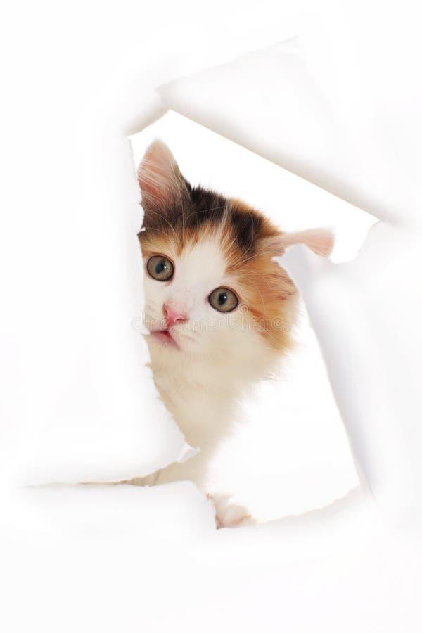 Το γατάκι κοιτάζει μέσω μιας τρύπας σε έναν τοίχο εγγράφου στοκ εικόνες