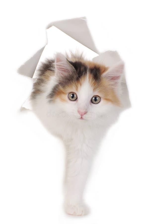 Το γατάκι κοιτάζει μέσω μιας τρύπας σε έναν τοίχο εγγράφου στοκ εικόνα με δικαίωμα ελεύθερης χρήσης